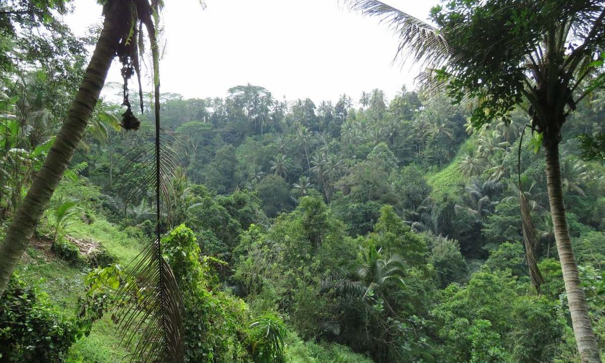 land for long term rent in Ubud - 1