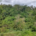 8 are plot for lease near Ubud-5