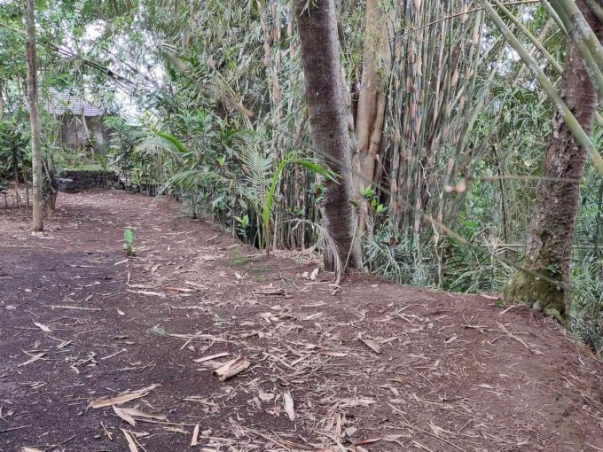 6 are plot for lease near Ubud-4